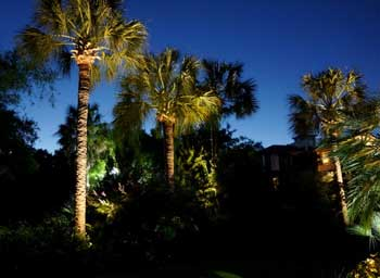landscape lighting design Moonlighting and Palm Trees & Landscape Design With Subtle Moonlighting azcodes.com